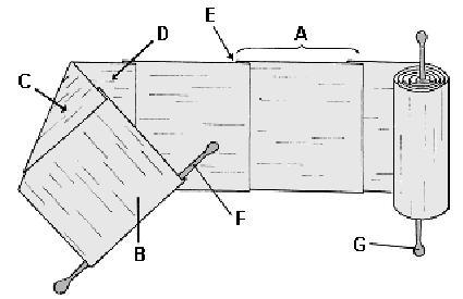 Partes del rollo de papiro